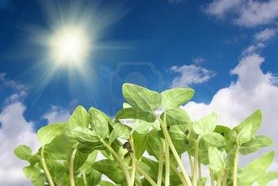 mensaje de las plantas
