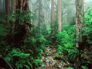 bosque-30