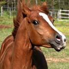 caballo-asustado, autismo, terapias asistidas con animales